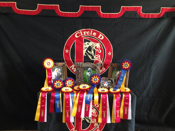Circle D Miniature Show and Sale Horses