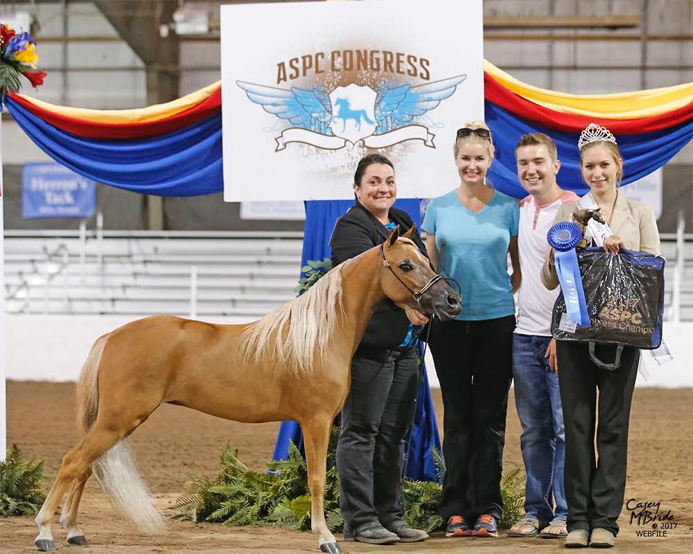 Double K's She's A Sassy Kid - 2017 CONGRESS CHAMPION Classic Aged Mare - 5 Years and Older - 42inches & Under